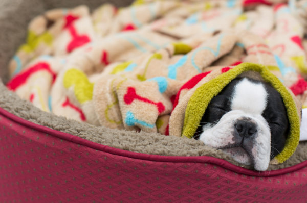 cave beds for dogs