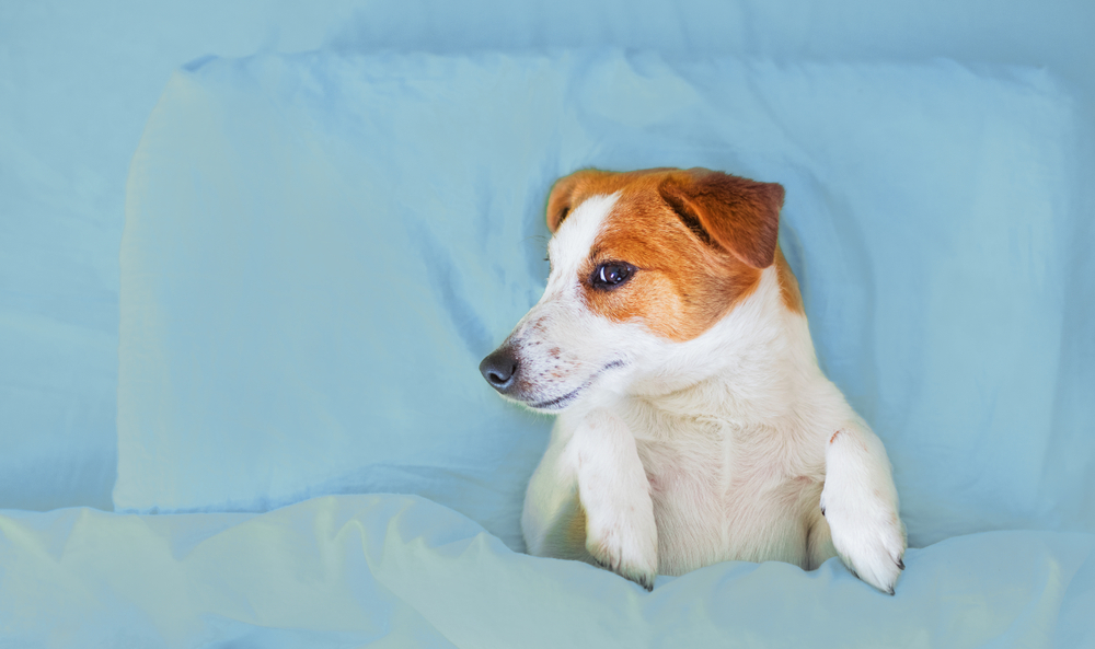 best beds for dogs with incontinency