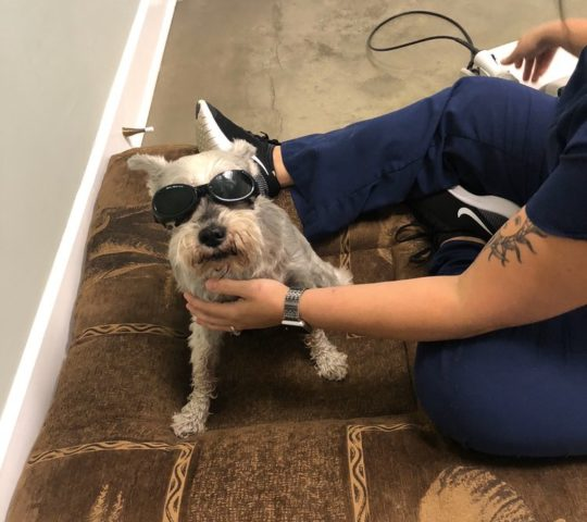 Veterinary Acupuncture and Wellness